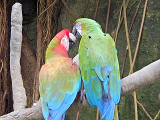 Explore Moody Gardens Couples Package