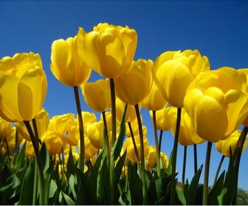Spring Seasonal Promotion