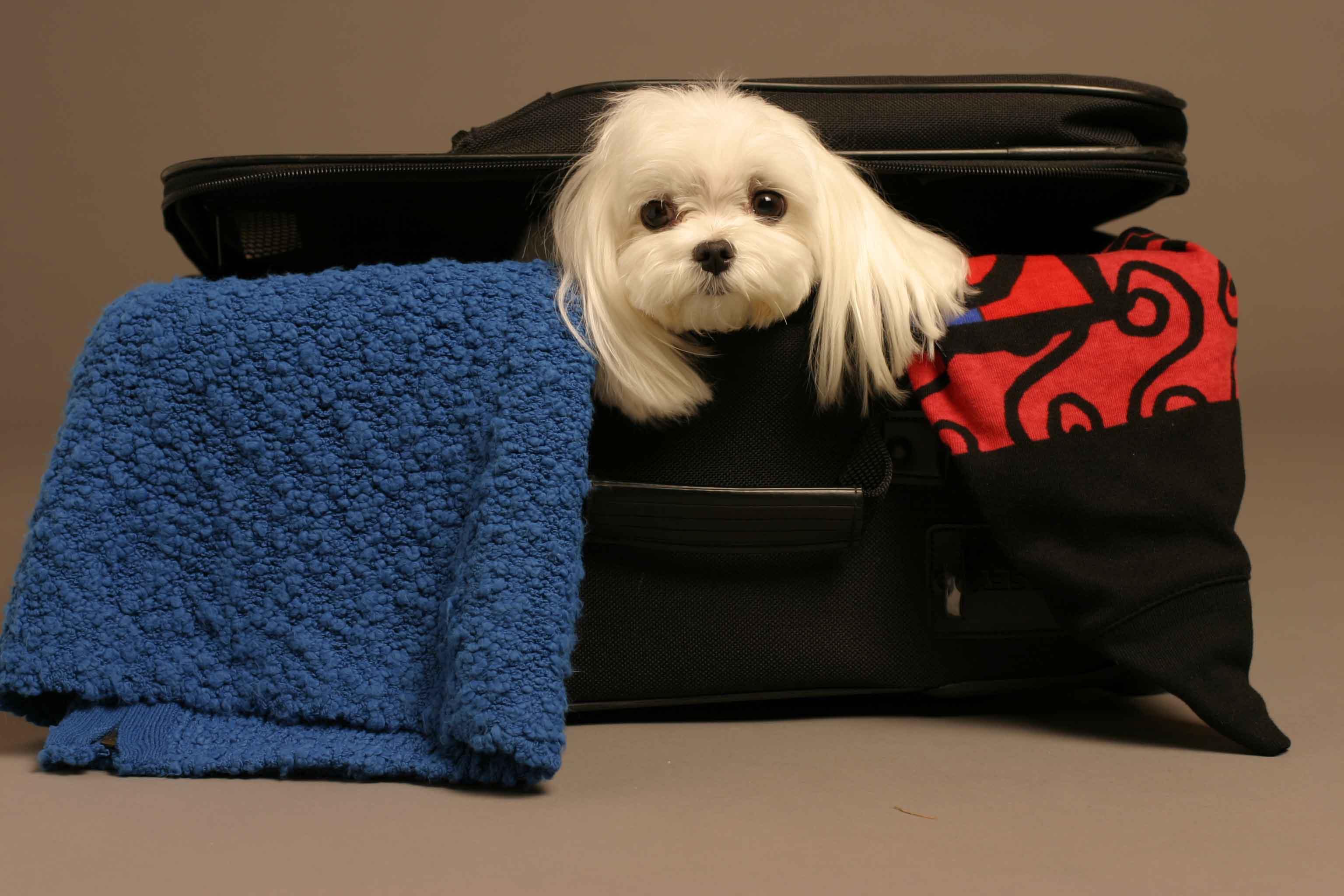 Pet Package!
