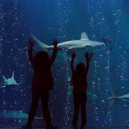 Aquarium Package